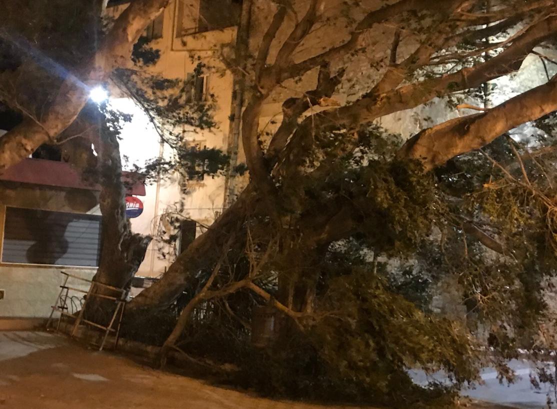Forte vento a Cefalù, Termini e nei comuni madoniti: alberi e rami volano in strada