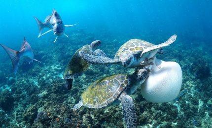 Salvaguardia e valorizzazione del mare: incontro di Lega Navale Italiana e BCsicilia