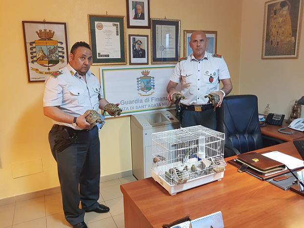 Sgominato commercio illegale di fauna protetta