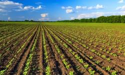 Più di duecento milioni per i giovani agricoltori siciliani