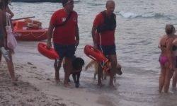 Mondello: cani di salvataggio in azione [VIDEO]