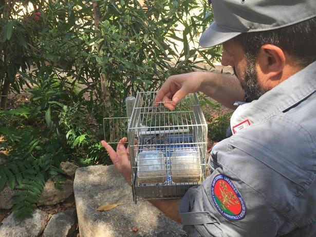 Sequestrati oltre 100 cardellini e 4 tartarughe