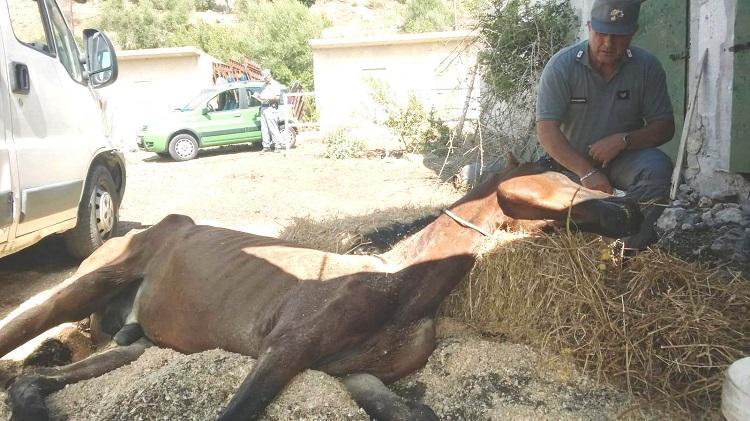 Caccamo denunciato un uomo per maltrattamento agli animali