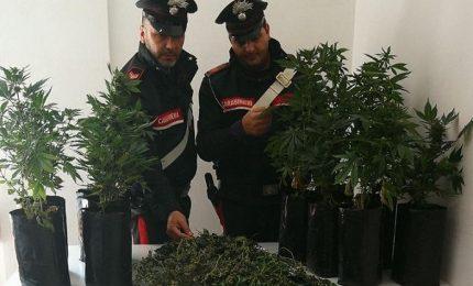 Sequestrato un chilo e mezzo di Marijuana (Foto)