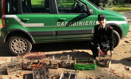 Blitz dei carabinieri libera specie protetta di volatili