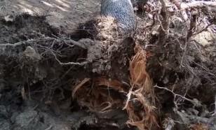 E' morta la donna colpita da un albero nel Parco delle Madonie