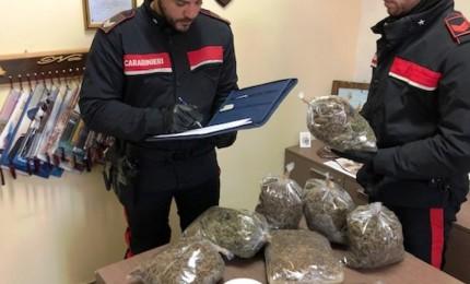 Maxi sequestro di marijuana, in arresto 28enne nigeriano