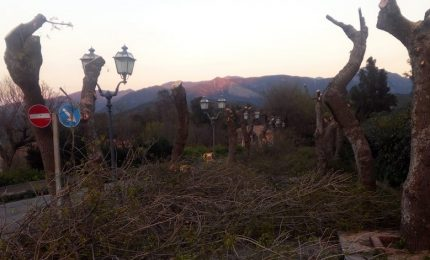 A Castelbuono fa discutere la potatura degli alberi