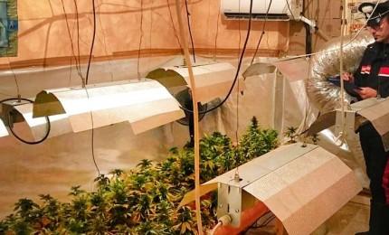 Chi la coltiva in casa e chi la spaccia, incessanti gli arresti per droga
