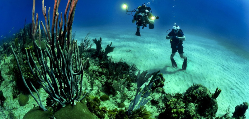 Biodiversità marina, bando per assegno di ricerca a Palermo