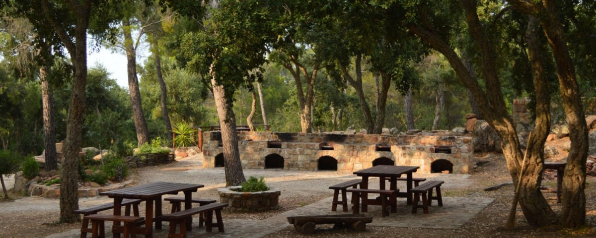 Pollina, il bosco di Serra Daino diventerà un Parco Avventura