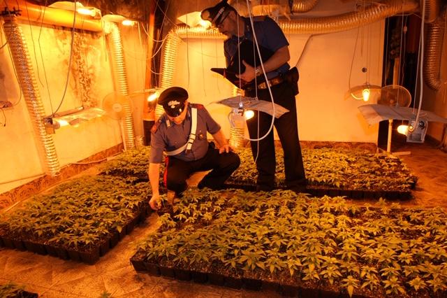 Arrestato 62enne per coltivazione indoor di sostanze
