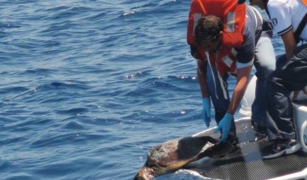 Riprendono il mare tre Caretta Caretta