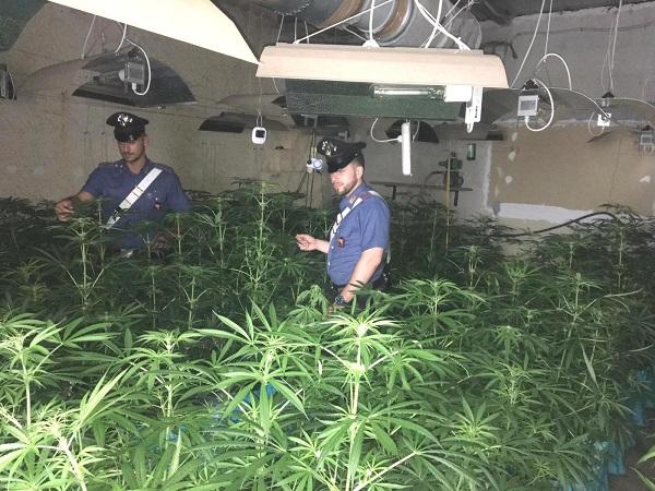 I carabinieri scoprono una piantagione indoor