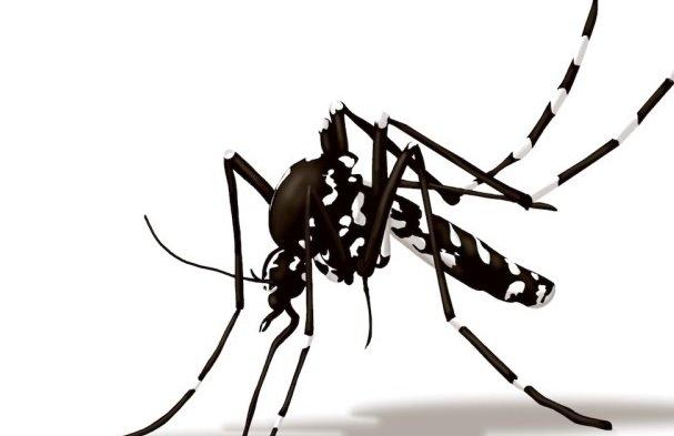 Zanzara tigre, torna l'allarme del virus Chikungunya