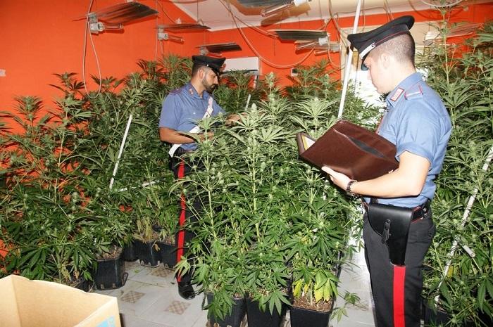 Scoperta dai carabinieri una nuova piantagione indoor