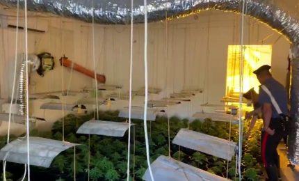 Scoperta una piantagione a San Mauro, in tre in manette (foto)
