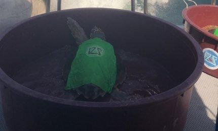 Tre tartarughe sono tornate in mare