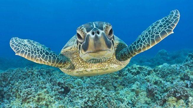 Cefalù, continua la schiusa di delle uova di tartaruga: parola all'esperto