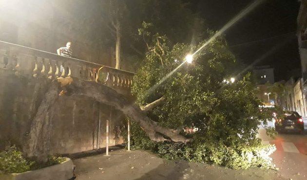 Cefalù, albero si abbatte sulla sede stradale in pieno centro