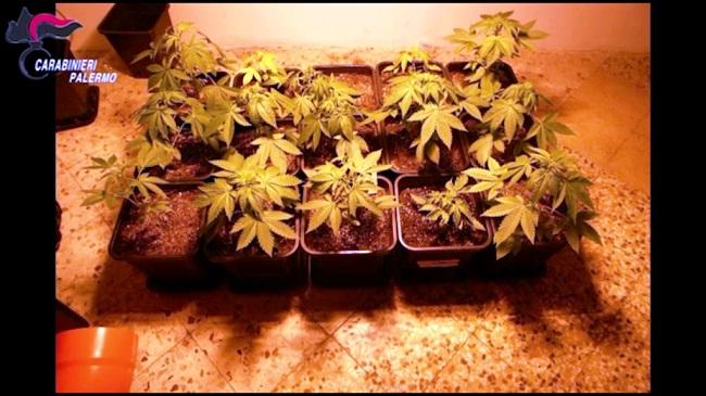 Una intera famiglia dedita alla coltivazione di marijuana