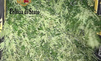 Sequestrata una piantagione di marijuana