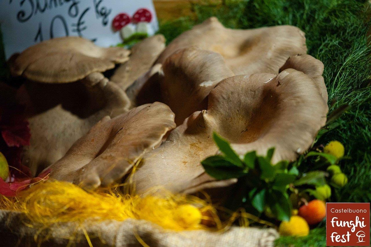 Castelbuono, sta per tornare il Funghi Fest
