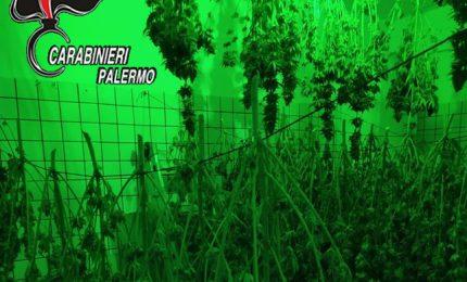 """Trabia: i carabinieri individuano una piantagione """"indoor"""" di marijuana"""