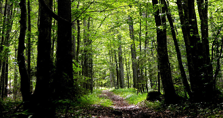 Finanziati 500 mila euro per i boschi di San Mauro Castelverde