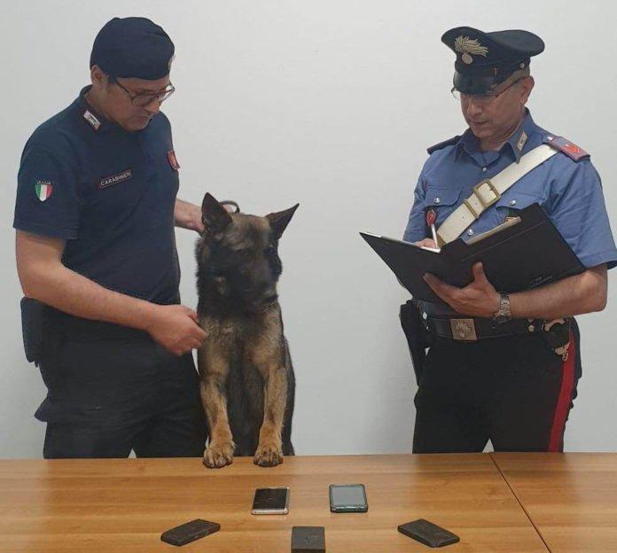 Carabinieri, controlli antidroga in tutta la provincia: eseguiti arresti dalla Compagnia di Cefalù