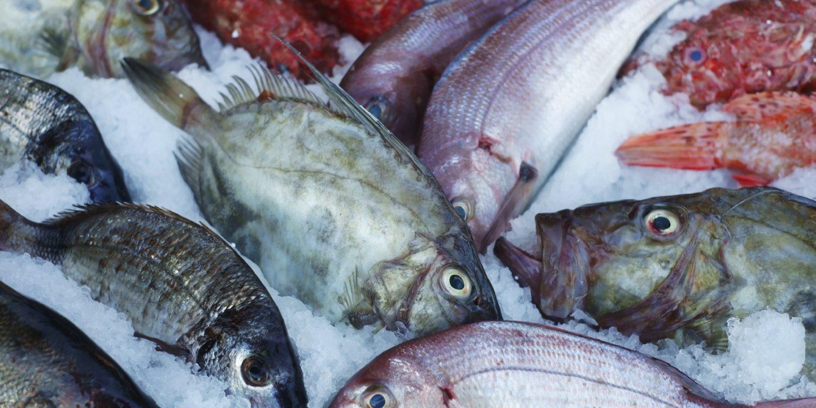 Carabinieri: sequestrati 126 chili di pesce e devoluti in beneficenza