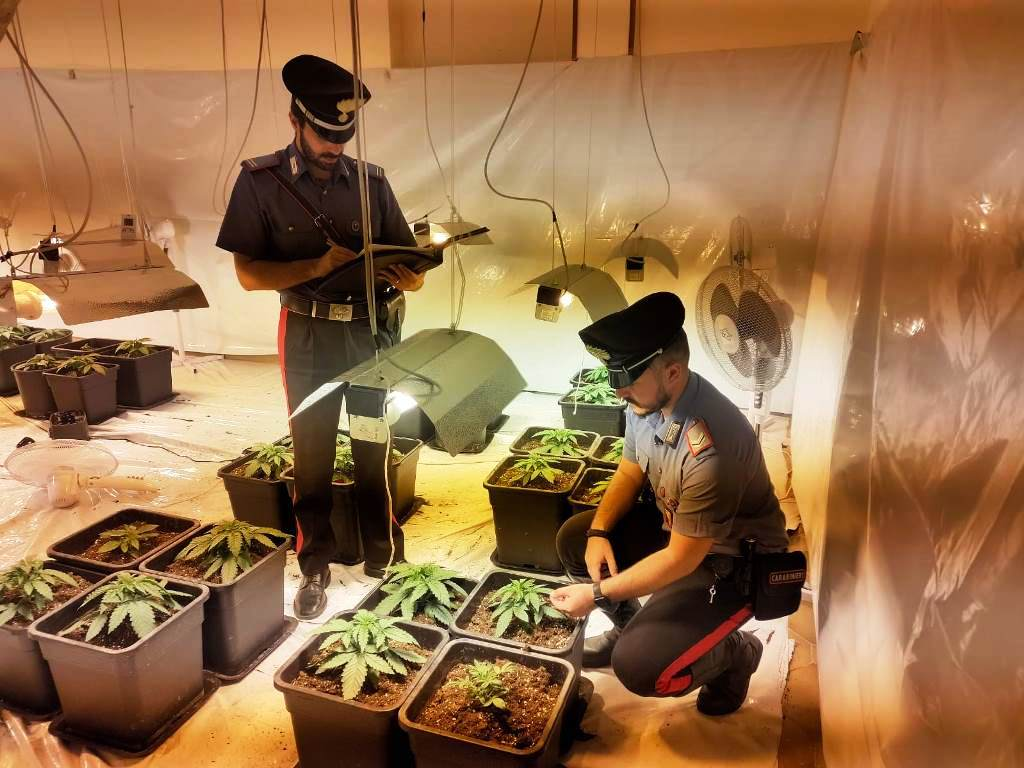 Padre e figlio coltivavano marijuana indoor: arrestati dai carabinieri